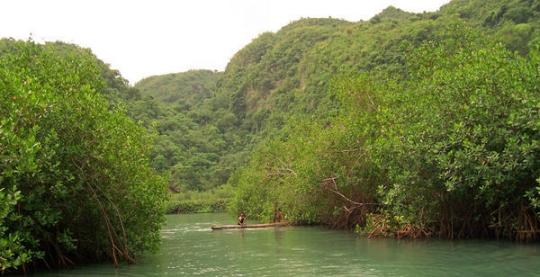 Haitimangrove
